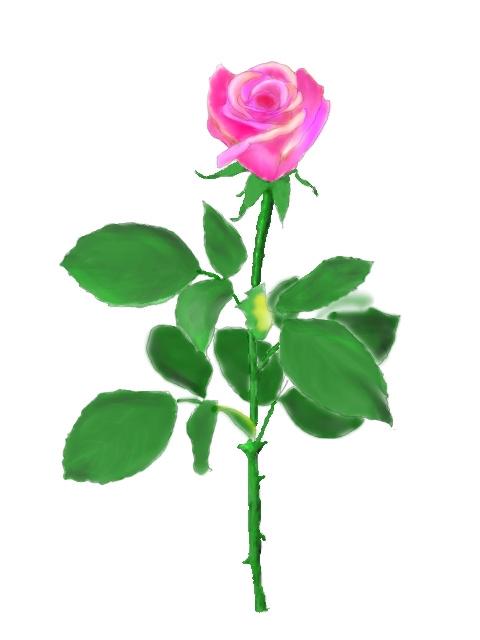 水彩で描いたバラ